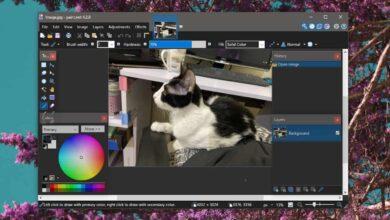 Photo of Cómo marcar fotos de forma discreta para evitar el robo en Windows 10